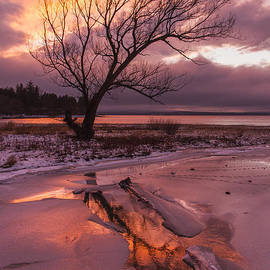 Andy Gimino - Winter- Charlotte VT- Sunset-Tree-silhouette