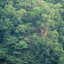 Alexander Kunz - Vertical Vegetation