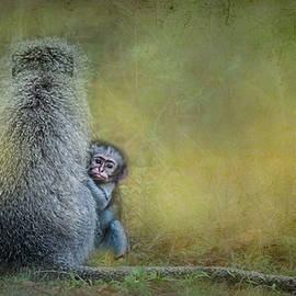 Ronel Broderick - Vervet Monkey mother and baby