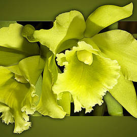 Phyllis Denton - Very Green Orchids