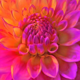 Jennie Marie Schell - Vibrant Dahlia Flower