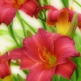 Kay Novy - Vibrant Lilies