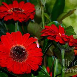 Kaye Menner - Vibrant Red Gerberas