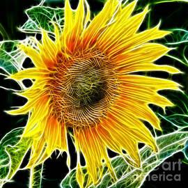 Mariola Bitner - Vibrant Sunflower