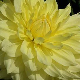 Christiane Schulze Art And Photography - Vibrant Yellow