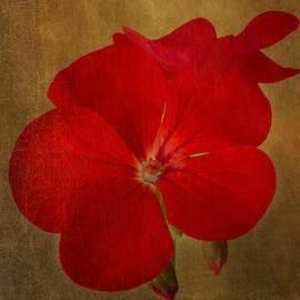 Marina Kojukhova - Victorian Red