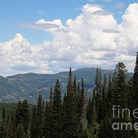 Birdlegs Photography - View from Big Mountain-Utah
