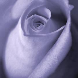 Jennie Marie Schell - Vinage Lavender Rose Bud Flower
