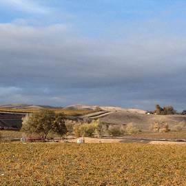 Laurie Clayton - Vineyard Hills