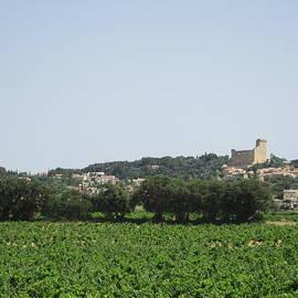 Pema Hou - Vineyard in Provence