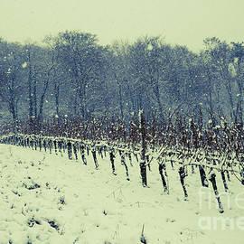Vineyard in winter 2