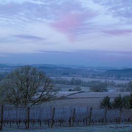 Vineyard morning light