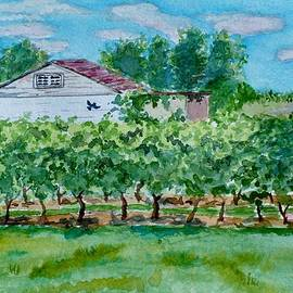 Jeannie Allerton - Vineyard of Ontario 2