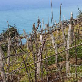 Vineyard on a slope