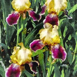 Susan Savad - Vingolf Iris