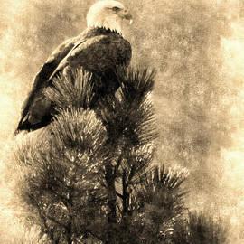 Priscilla Burgers - Vintage Bald Eagle