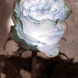Lali Kacharava - Vintage blue rose