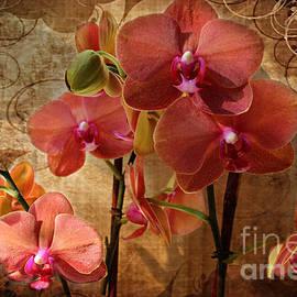 Judy Palkimas - Vintage Burnt Orange Orchids