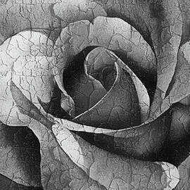Georgiana Romanovna - Vintage Cracked Rose