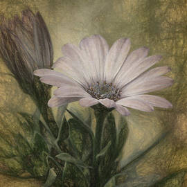 Lois Bryan - Vintage Daisy
