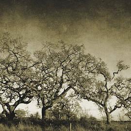 Mel Gross - Vintage Oak Trees