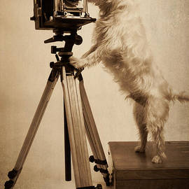 Edward Fielding - Vintage Pho Dog Grapher Westie