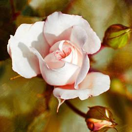 Christina Rollo - Vintage Rose