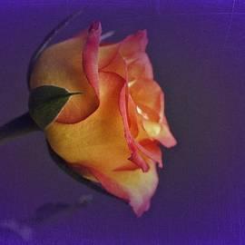 Richard Cummings - Vintage Rose Day