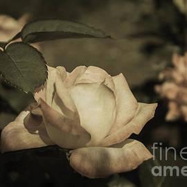 Arlene Carmel - Vintage Rose Garden