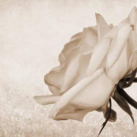 Judy Vincent - Vintage Rose