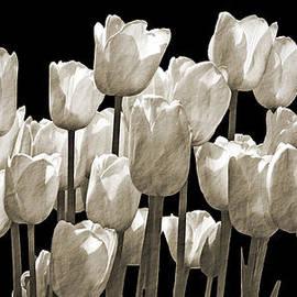 Tina Wentworth - Vintage Tulip Flowers