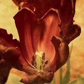 Georgiana Romanovna - Vintage Tulips
