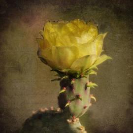 Sandra Selle Rodriguez - Vintage Yellow Cactus