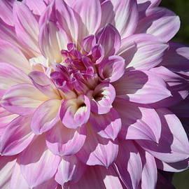Christiane Schulze Art And Photography - Violet Autumn Princess