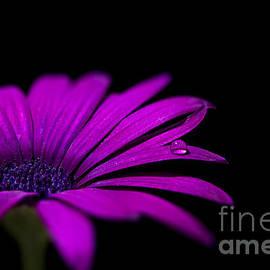 James Kinvig - Violet Flower