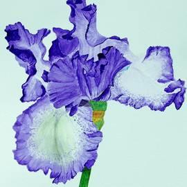Linda Brody - Violet Iris Flower Colorized
