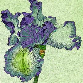 Linda Brody - Violet Iris Flower Digitized