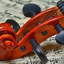 Paul Ward - Violin Scroll Up Close