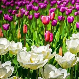 Jordan Blackstone - Visions of Spring