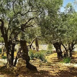 Sandra Pena de Ortiz - Vital Groups in Gethsemane