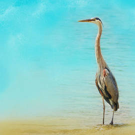 Jai Johnson - Wading - Blue Heron - Wildlife