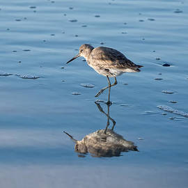 Cindy Archbell - Wading Sandpiper