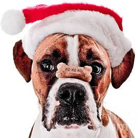Jt PhotoDesign - Waiting for Christmas