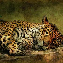 Lois Bryan - Wake Up Sleepyhead