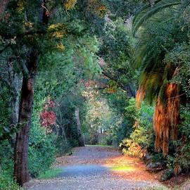 Leslie Hunziker - Walking the Creek Path