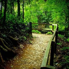 Sandra Sengstock-Miller - Walking Track Bunya Mountains National Park Qld Australia