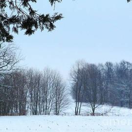 Tina M Wenger - walking trail at Wintertime 2014
