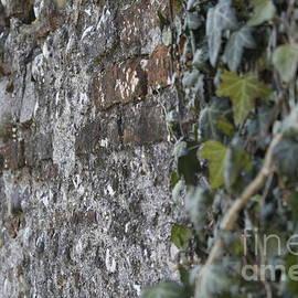 Donato Iannuzzi - Wall Shoots