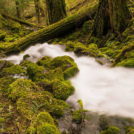 Christopher Fridley - Warm Creek