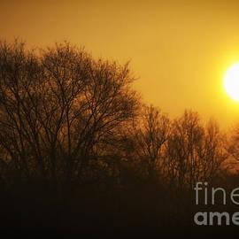 Thomas Woolworth - Warm Glow of the Morning Sunrise